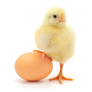 chick-and-egg
